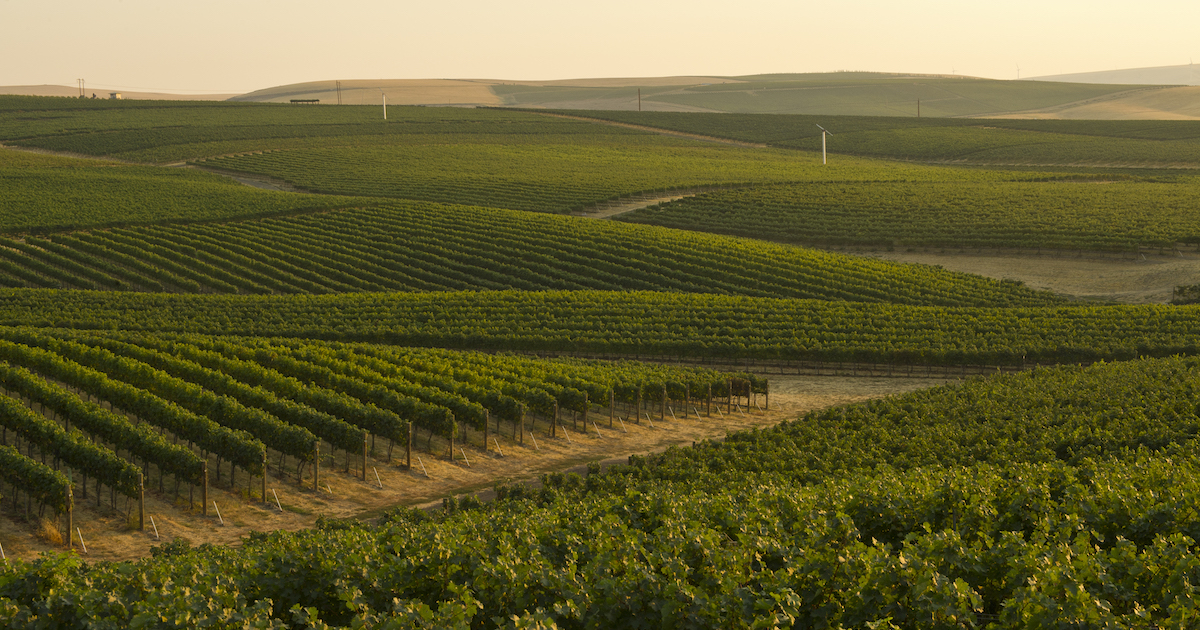 The Wine Regions : Washington State